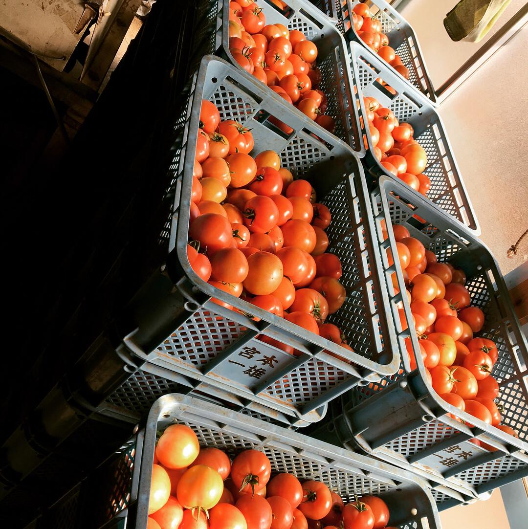 tomato best for skin