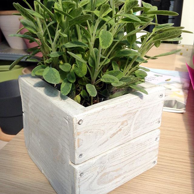 beautiful and elegant Small Pallet planter