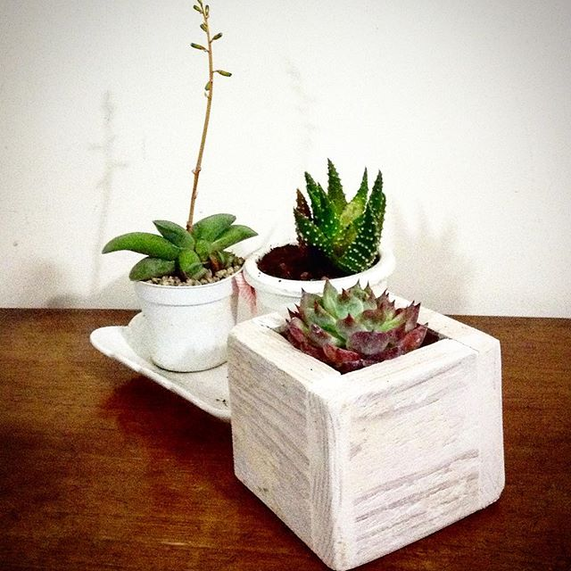 Three most alluring and perfectly designed Pallet planters