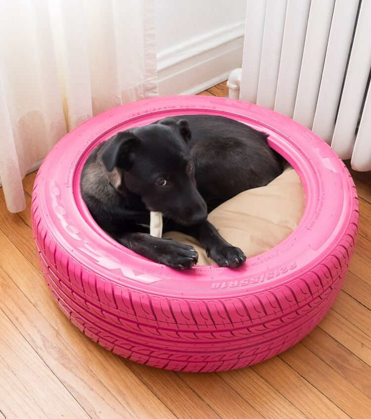 Old Tyre Bed Dog