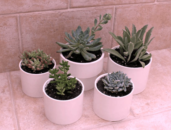 PVC Planter Ideas For Garden