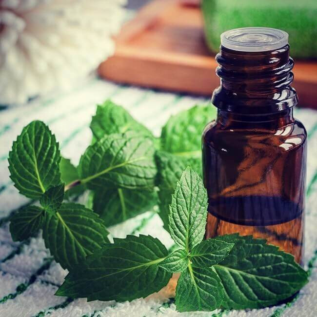 Why choosing Peppermint Oil for Hair Growth