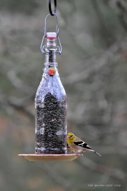 Bird Feeder Bottle
